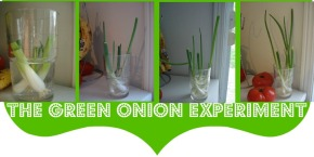 Pinterest To Life: The Green Onion Experiment